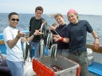 LAL-Torbay-YL-mackerel-Fishing